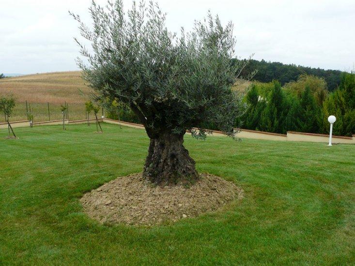 Tonte et entretien de gazon paysagiste toulouse les for Entretien jardin 76